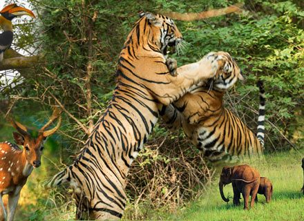 Wild Life Tour Packages in India